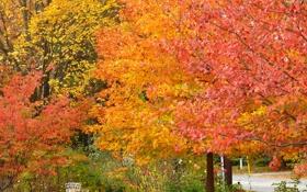 Обои осень, деревья, парк, скамья