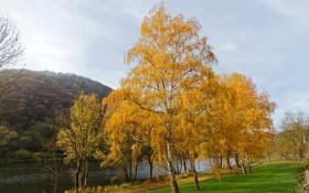 Обои осень, трава, деревья, скамейка, река, Германия, аллея