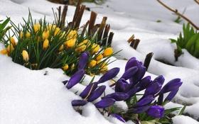Картинка снег, цветы, природа
