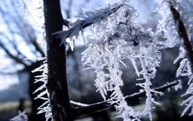 Обои ветки, мороз, зима, снег, красиво, Иней