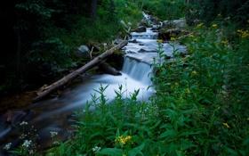 Обои зелень, лес, трава, вода, природа, ручей, дерево