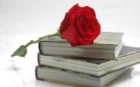 Обои роза, цветок, красная, лепестки, книги