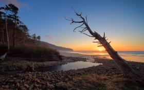 Картинка море, закат, дерево