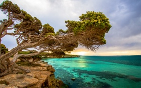 Картинка море, дерево, скалы, берег