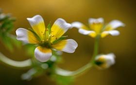 Обои природа, лепестки, стебель, соцветие