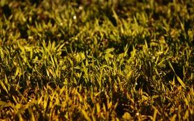 Обои зелень, лето, трава, сочная