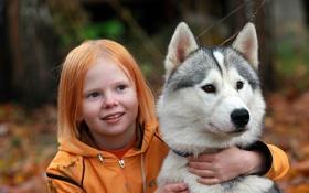 Обои друг, девочка, хаски, собака