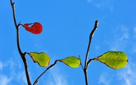 Обои листья, осень, небо, природа, ветка, цвет