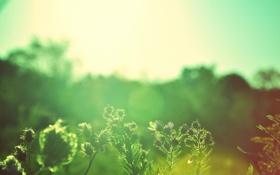 Обои лето, солнце, лучи, природа, фото, обои, растения