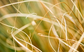 Картинка трава, природа, фото, обои, macro photos, травинки, nature wallpapers