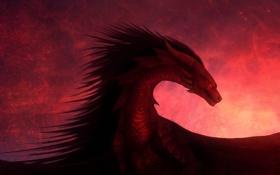 Картинка дракон, крылья, красный фон