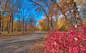 Обои дорога, осень, листья, деревья, парк, багрянец