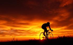 Картинка поле, велосипедист, вечер
