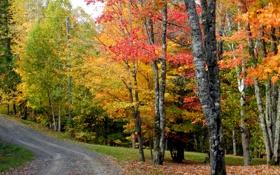 Картинка дорога, осень, лес, небо, деревья, холм