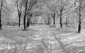 Обои снег, Зима, утро, черно-белое фото, деревья в снегу