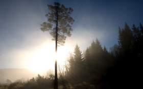 Картинка лес, свет, пейзаж, утро
