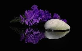 Обои макро, цветы, отражение, краски, лепестки, раковина, ракушка