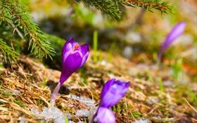 Обои снег, ёлка, цветы