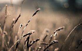 Картинка поле, лето, солнце, макро, лучи, природа, фото