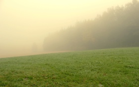 Картинка лес, трава, деревья, туман
