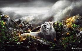 Картинка небо, трава, взгляд, листья, облака, камни, ветер