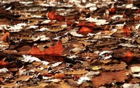 Обои осень, листья, природа