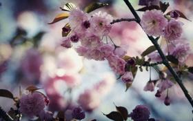 Обои листья, цветы, ветки, нежность, растения, весна, лепестки