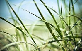 Обои зелень, трава, цопирайт