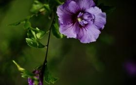 Обои Фиолетовая энергия, цветок, ветка