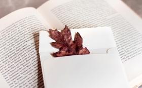 Обои осень, белый, текст, лист, листок, книга, страницы
