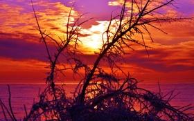 Обои закат, облака, ветки, небо, озеро, море, дерево