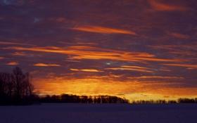 Обои зима, небо, облака, снег, деревья, закат, оранжевый
