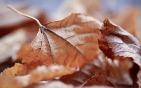 Обои осень, листья, leaves, макро обои, full hd wallpapers 2560x1440, leaf walls, осенние картинки на рабочий ...