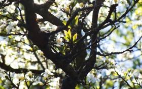 Картинка ветки, лист, дерево, листок, Цветы, весна, листочки