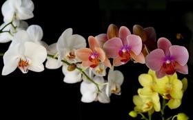 Картинка цветок, цветы, природа, букет, нежные, орхидеи, красивые