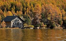 Обои осень, лес, природа, дом, река, вилла