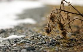 Картинка трава, макро, природа, камни