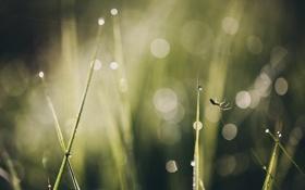 Картинка лето, трава, макро, паутина, паук, боке, прогулки под солнцем