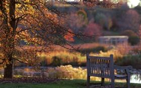 Картинка осень, природа, скамья