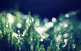 Обои трава, фото, зелень, боке, обои, природа, растения