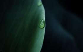 Обои макро, лист, роса, фото, капля
