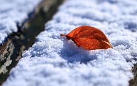 Обои зима, листья, макро, снег, листок, утро, листки