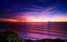 Обои листья, облака, закат, берег, мангровые, море