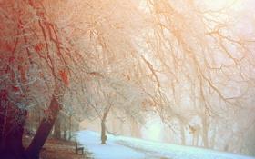 Картинка зима, город, парк, скамья