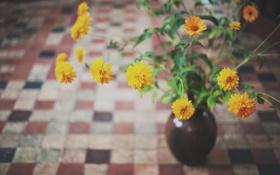 Обои цветы, желтые, лепестки, ваза