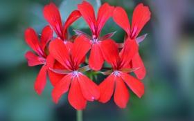 Картинка цветы, лепестки, экзотика, соцветие