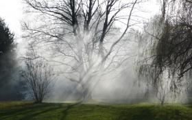 Картинка природа, туман, дерево, утро