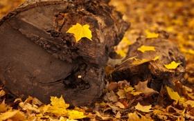 Обои листья, осень, макро, дерево