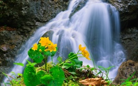Обои река, поток, водопад, ручей, горы, цветы