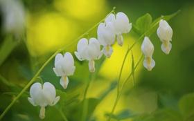 Картинка цветы, ветка, белое сердце